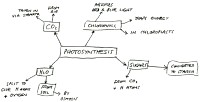 Bubble diagram about Photosynthesis