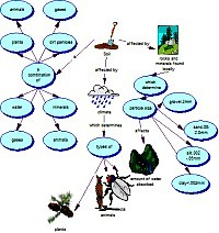 Concept map about Ecology