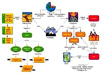 Mindmaps Directory Page 40 Of 77