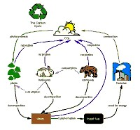 Concept map of Carbon cycle