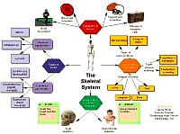 Concept map of the Skeletal system