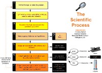 Flow chart about The Scientific process