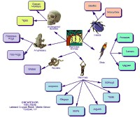 Mindmap about Rainforest animals