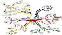 Mindmap of Mind map laws