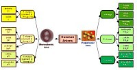 Tree diagram about Anions